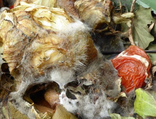 Mouldy food and compost – dangers to dogs and cats!