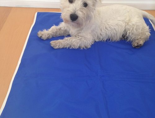 Cooling Mats for Pets